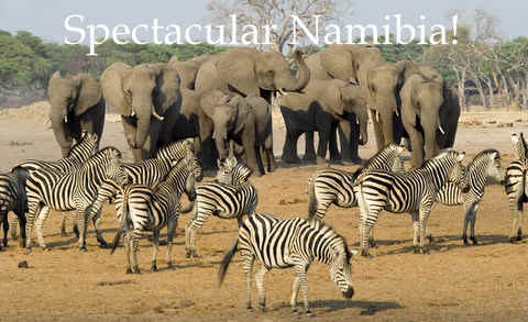 Combining geocaching trips in Namibia with the adventure of a African wildlife safari