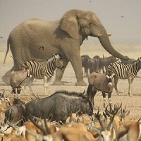 Low Covid-risk safaris in Namibia