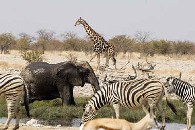 Affordable camping or lodge safri tour: Experience the scenic beauty and amazing wildlife of south-western Africa on this comfortable overland adventure.