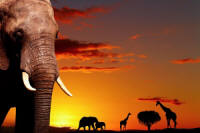 Namibia Vacation Tour Packages: Explore the top wildlife destinations in Namibia on this short camping safari!