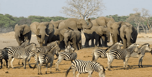 Spectacular wildlife viewing safaris in the African winter months.